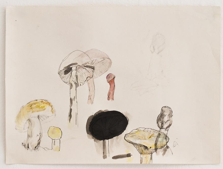 5.svampar